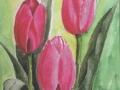 Tulpen rosa-aa