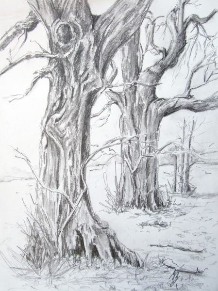 Studie-Bäume