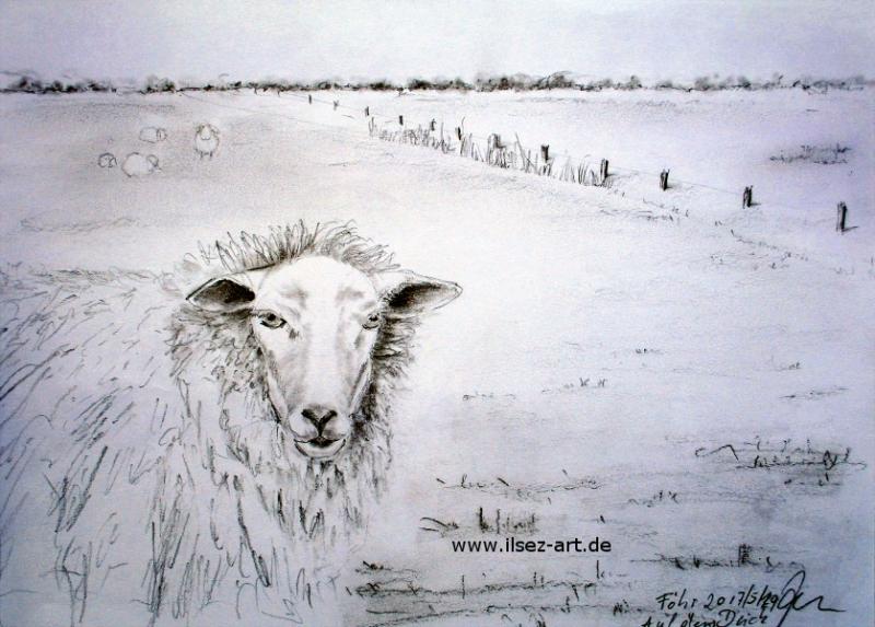 Föhr, Schaf